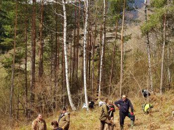 """Засаждане на гора в планина """"Витоша"""", 29.06.2019 г."""